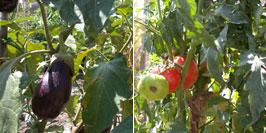 Vegetables from Tony's garden.
